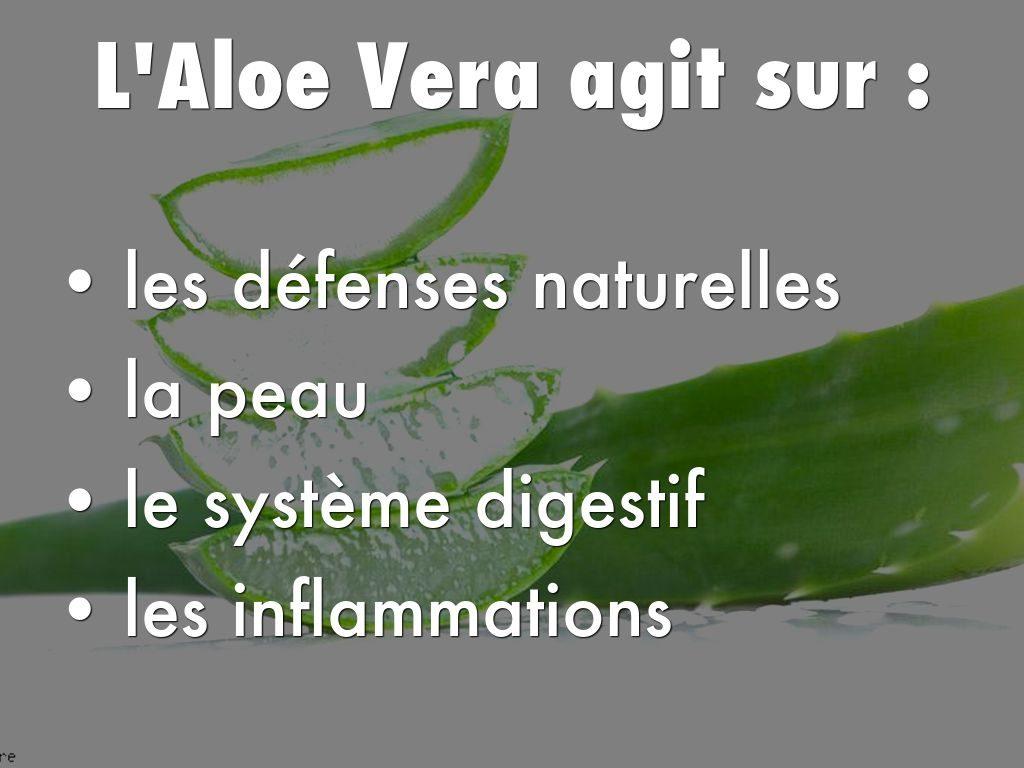 Les vertus de l 39 aloe vera pour votre corps info service for Entretien aloe vera interieur