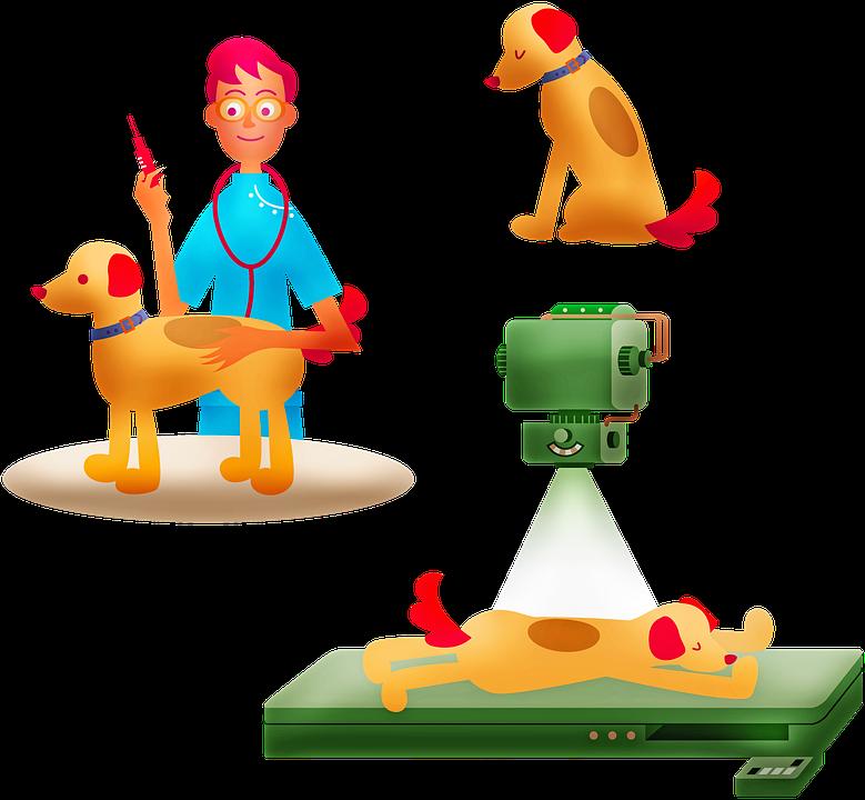 , Une Assurance pour votre Animal